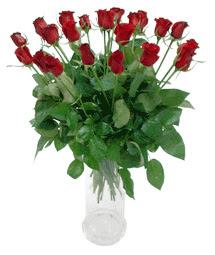 Zonguldak ucuz çiçek gönder  11 adet kimizi gülün ihtisami cam yada mika vazo modeli