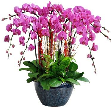 9 dallı mor orkide  Zonguldak 14 şubat sevgililer günü çiçek