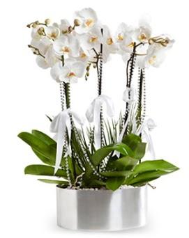 Beş dallı metal saksıda beyaz orkide  Zonguldak çiçek yolla