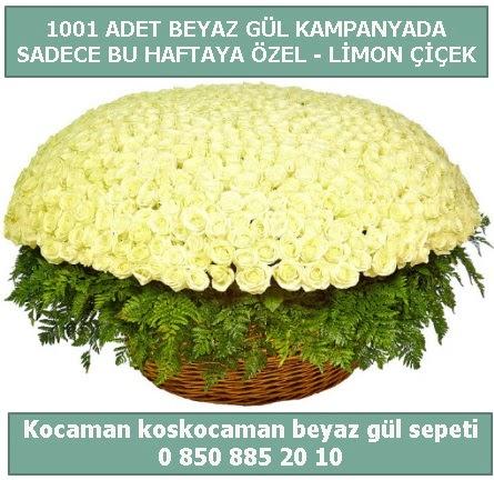 1001 adet beyaz gül sepeti özel kampanyada  Zonguldak çiçek gönderme sitemiz güvenlidir