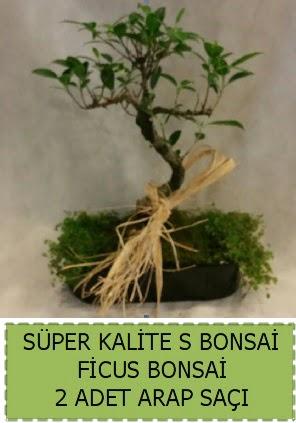 Ficus S Bonsai ve arap saçı  Zonguldak ucuz çiçek gönder