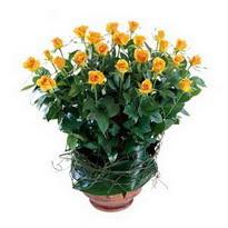 Zonguldak anneler günü çiçek yolla  10 adet sari gül tanzim cam yada mika vazoda çiçek