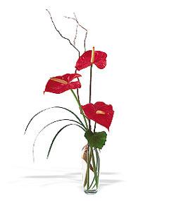 Zonguldak çiçek siparişi sitesi  cam yada mika Vazoda 3 adet  antoryum