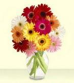 Zonguldak yurtiçi ve yurtdışı çiçek siparişi  cam yada mika vazoda 15 özel gerbera