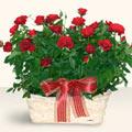 Zonguldak çiçekçi mağazası  11 adet kirmizi gül sepette