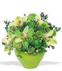 cam yada mika vazoda 5 adet orkide   Zonguldak online çiçekçi , çiçek siparişi