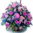 karisik mevsim kir çiçekleri  Zonguldak çiçek gönderme sitemiz güvenlidir