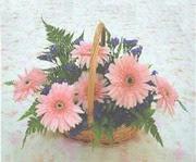 gerbera çiçeklerinde sepet   Zonguldak çiçek yolla