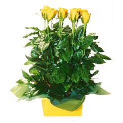 11 adet sari gül aranjmani  Zonguldak online çiçekçi , çiçek siparişi