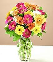Zonguldak çiçek online çiçek siparişi  17 adet karisik gerbera