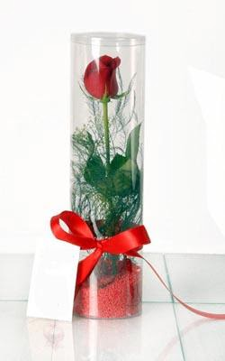 Zonguldak çiçek yolla  Silindir vazoda tek kirmizi gül