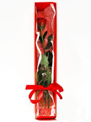 Zonguldak çiçek yolla , çiçek gönder , çiçekçi   1 adet kutuda gül