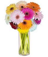 Zonguldak internetten çiçek siparişi  Farkli renklerde 15 adet gerbera çiçegi