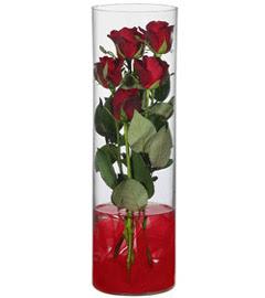 cam içerisinde 7 adet kirmizi gül  Zonguldak çiçekçiler