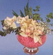 Zonguldak çiçek mağazası , çiçekçi adresleri  Dal orkide kalite bir hediye