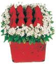 Zonguldak çiçek gönderme  Kare cam yada mika içinde kirmizi güller - anneler günü seçimi özel çiçek