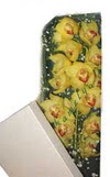 Zonguldak çiçek gönderme  Kutu içerisine dal cymbidium orkide