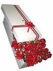 Zonguldak ucuz çiçek gönder  11 adet 1.kalite magnum güller