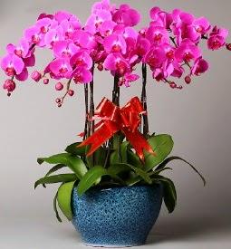 7 dallı mor orkide  Zonguldak çiçek online çiçek siparişi