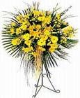 Zonguldak çiçek yolla , çiçek gönder , çiçekçi   Sari kazablanka Ferforje