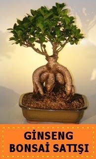 Ginseng bonsai satışı japon ağacı  Zonguldak cicek , cicekci
