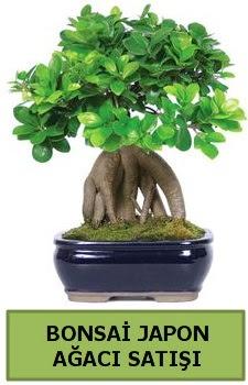 Bonsai japon ağacı satışı  Zonguldak çiçek satışı