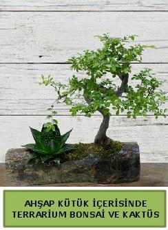 Ahşap kütük bonsai kaktüs teraryum  Zonguldak internetten çiçek siparişi
