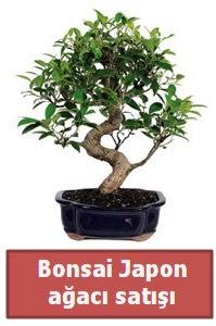 Japon ağacı bonsai satışı  Zonguldak çiçek siparişi sitesi