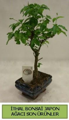 İthal bonsai japon ağacı bitkisi  Zonguldak hediye sevgilime hediye çiçek