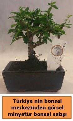 Japon ağacı bonsai satışı ithal görsel  Zonguldak çiçek yolla