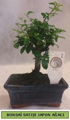 Minyatür bonsai ağacı satışı  Zonguldak çiçek gönderme