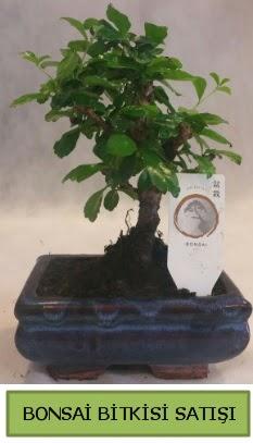 Bonsai ithal görsel minyatür japon ağacı  Zonguldak çiçekçi telefonları