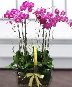 7 dallı mor lila orkide  Zonguldak çiçek gönderme sitemiz güvenlidir