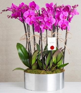11 dallı mor orkide metal vazoda  Zonguldak çiçek gönderme sitemiz güvenlidir