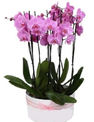 Beyaz seramik içerisinde 7 dallı mor orkide  Zonguldak ucuz çiçek gönder