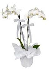 2 dallı beyaz orkide  Zonguldak güvenli kaliteli hızlı çiçek