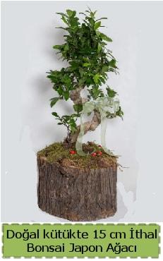 Doğal kütükte İthal bonsai japon ağacı  Zonguldak çiçek gönderme