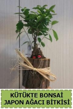 Kütük içerisinde doğal bonsai ağacı  Zonguldak ucuz çiçek gönder