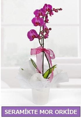 Seramik içerisinde birinci kalite tek dallı mor orkide  Zonguldak çiçekçi mağazası