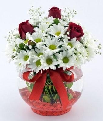Fanusta 3 Gül ve Papatya  Zonguldak internetten çiçek satışı