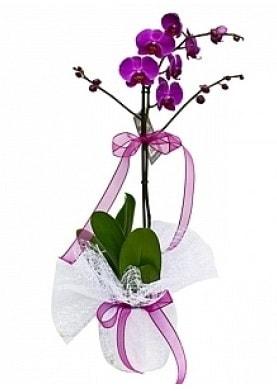 Tekli Mor Orkide  Zonguldak çiçek yolla