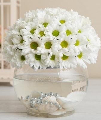 Fanusta beyaz Papatya  Zonguldak çiçek satışı