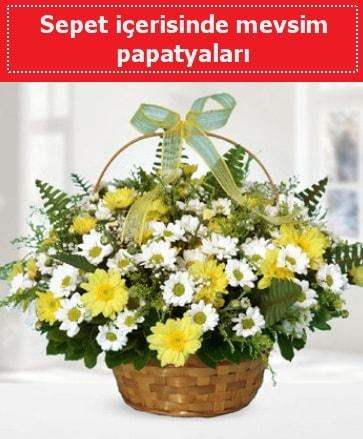 Sepet içerisinde mevsim papatyaları  Zonguldak çiçekçi telefonları